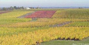 Vignobles du Layon - Saint-Aubin-de-Luigné (49)