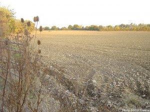 Champ cultivé près du Plessis-Massé