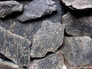 Fossiles du Maine-et-Loire - Végétaux carbonifères de Chaudefonds-sur-Layon