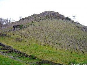 Vignes sur la Faille du Layon - Beaulieu-sur-Layon (49)
