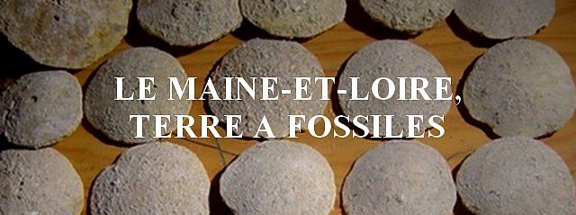 Le Maine-et-Loire, terre à fossiles