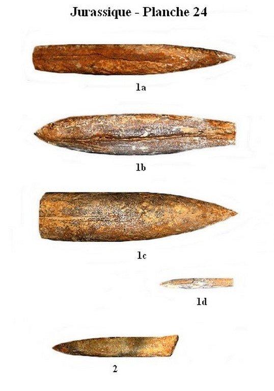 Jurassique 24 (Ammonites)