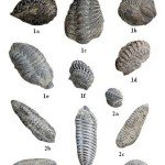 <b>Primaire 01 (Trilobites)</b> <br />