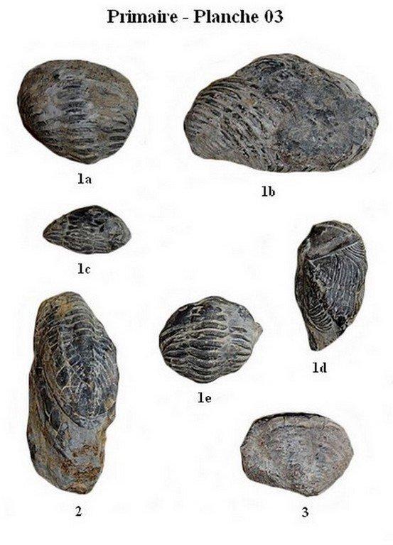Primaire 03 (Trilobites)