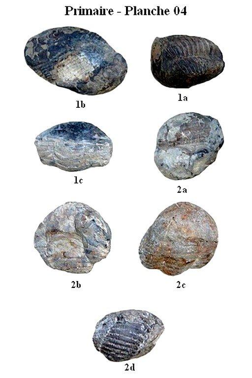 Primaire 04 (Trilobites)
